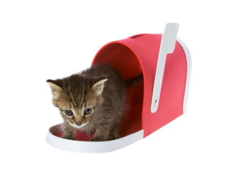 kitten_mailbox